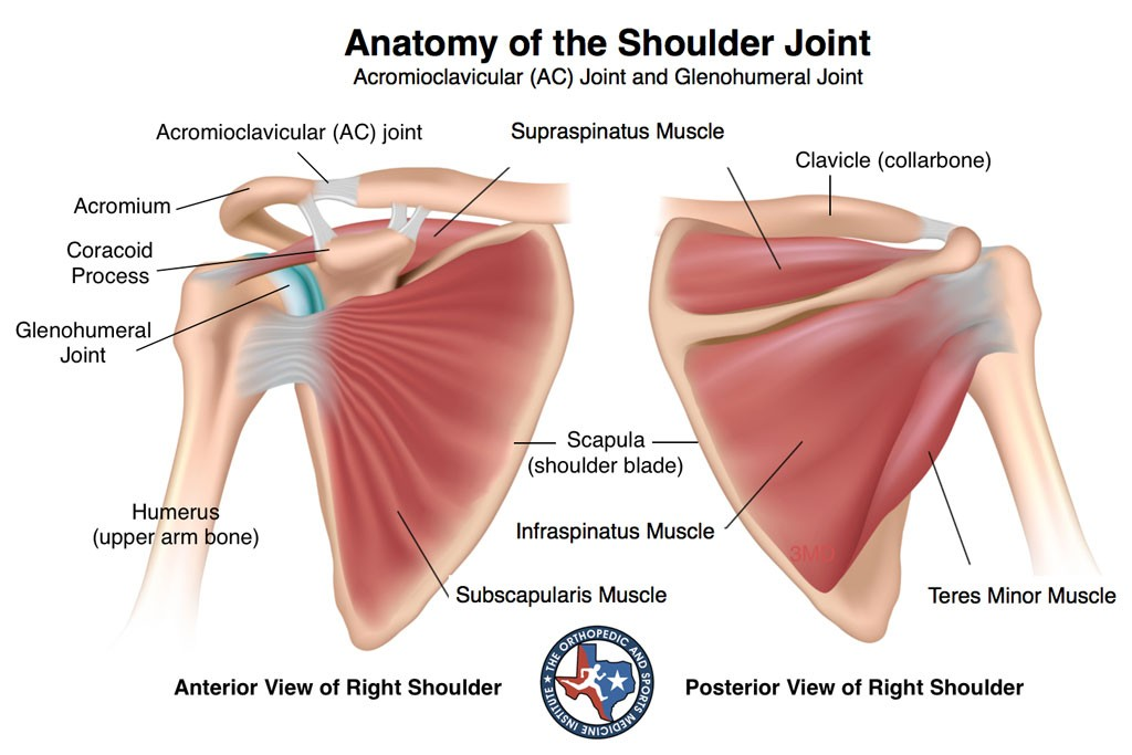 shoulder injuries fort worth