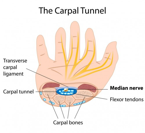 Carpal Tunnel Syndrome Anatomy of the Carpal Tunnel