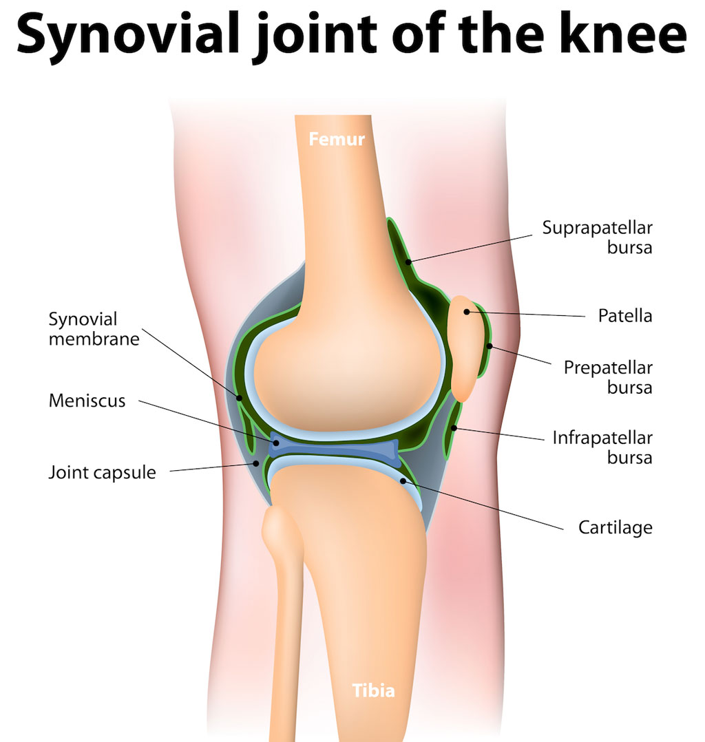Synovial-Joint-Knee - The Orthopedic & Sports Medicine Institute in ...